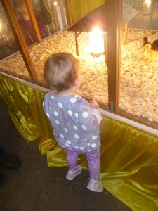 Looking at baby chicks @meredithspidel
