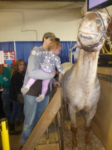 Horse at PA Farm Show @meredithspidel