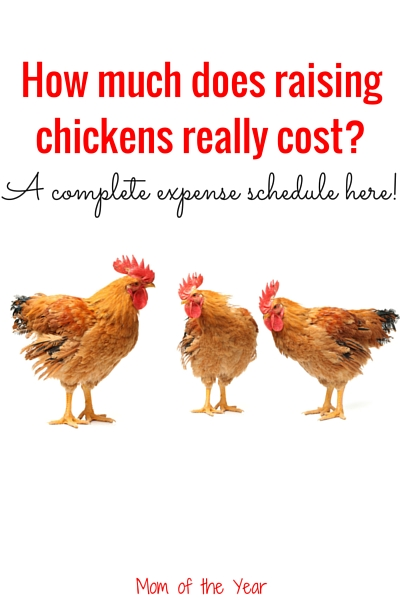 Breaking Down the Costs and Commitment of Raising Chickens - The ...