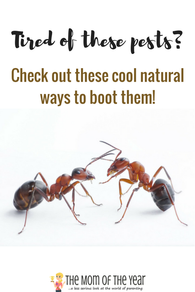 Tired of summer bugs? Check out these cool, natural ways to get rid of insects! You will love the sweet results and moreover, delight in the genius of these natural bug-repellent remedies.