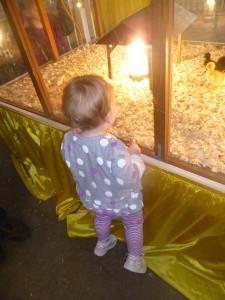 Looking at baby chicks @meredithspidel