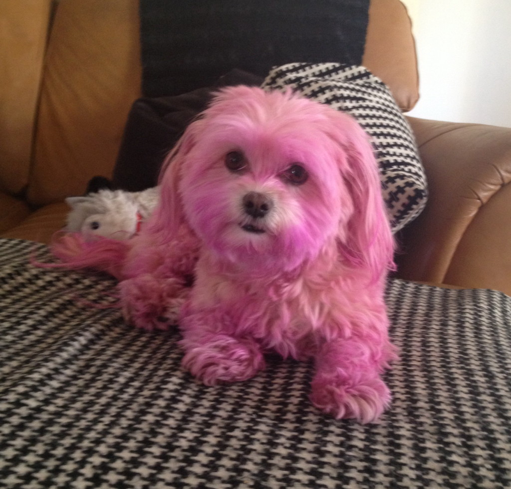I think this sweet pup looks fabulous!