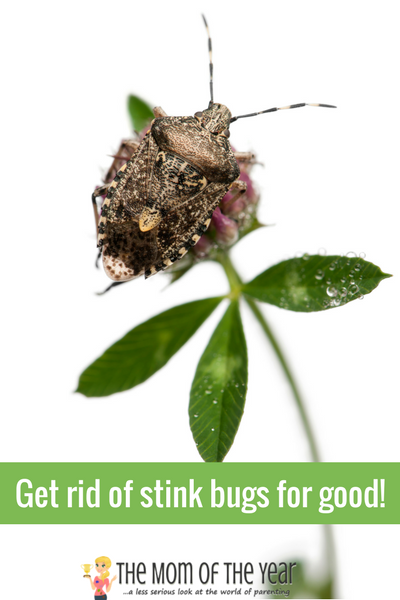 How To Get Rid Of Grubs The Natural Way