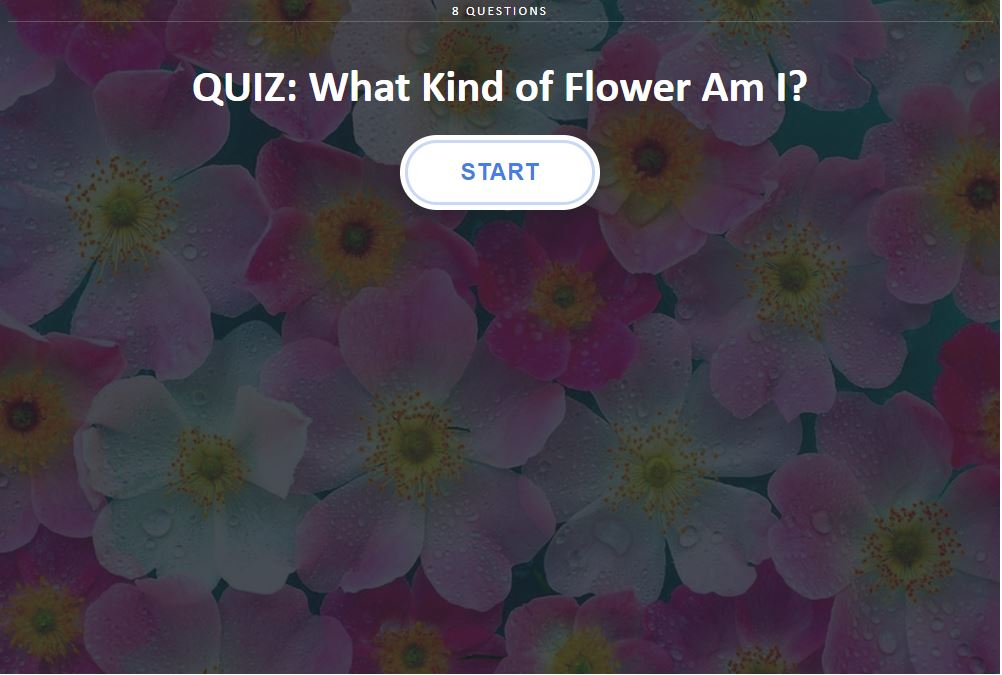 "Spring and the start of summer is the perfect time to delight in all of the gorgeous flower blooms! Take a fun minute to pause and channel your inner flower child with this sweet, ""What Type of Flower Are You?"" quiz! And let me know what your result was--I was so suprised by mine!"