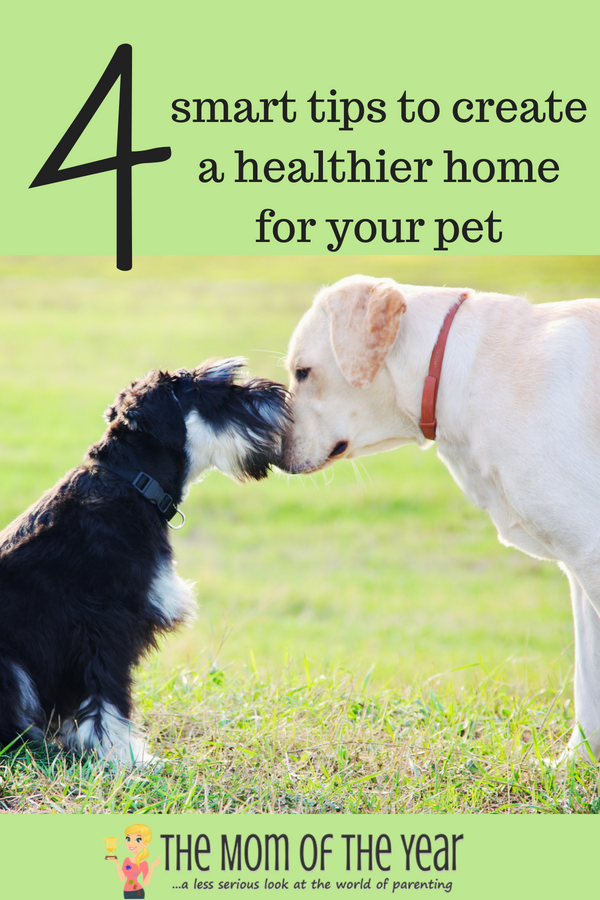 Creating a healthier pet-friendly home for our furry family members is so important! We love them so, and want what's best for our pets--make sure to take a minute to check out this important how-to to make your home safe for your fur babies!