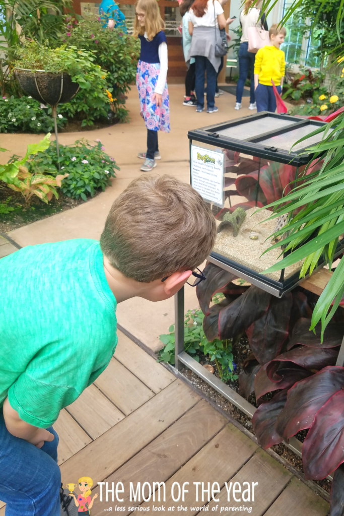 Visit the Hershey Gardens for a fun, kid-friendly stop! Here are 5 reasons you'll love this gorgeous spot. I'll bet you know about the Butterfuly Atrium, but have you heard about the cool surprise at Hoop House?