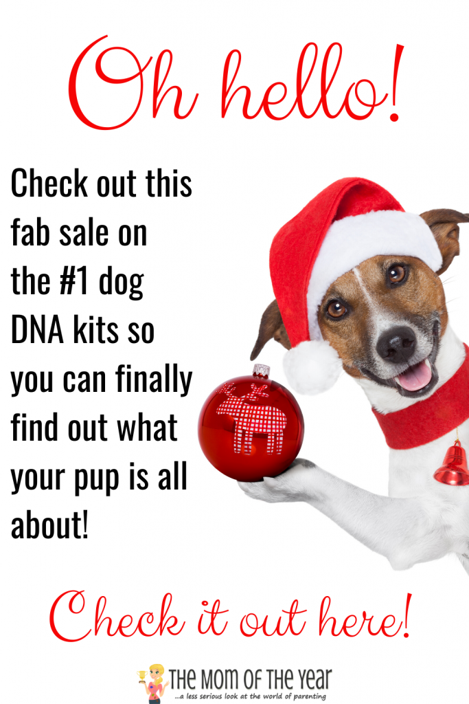 Wondering what your dog's breeding is? These increible dog DNA kits are SO eye-opening! Health indicators and genetic history included! Grab the fab sale on these kits here now!!