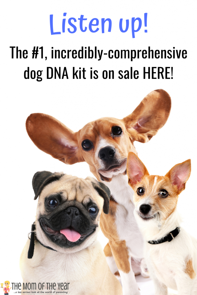Wondering what your dog's breeding is? These incredible dog DNA kits are SO eye-opening! Health indicators and genetic history included! Grab the fab sale on these kits here now!!