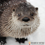 Winter is the perfect time to enjoy weekend fun at ZooAmerica! Check out all the special events and activities and get the scoop on the surprise behavior of the animals during these months!