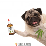 Curious if CBD can help your dog? Me too! Check out these 9 reasons why it can work so well--I was shocked!